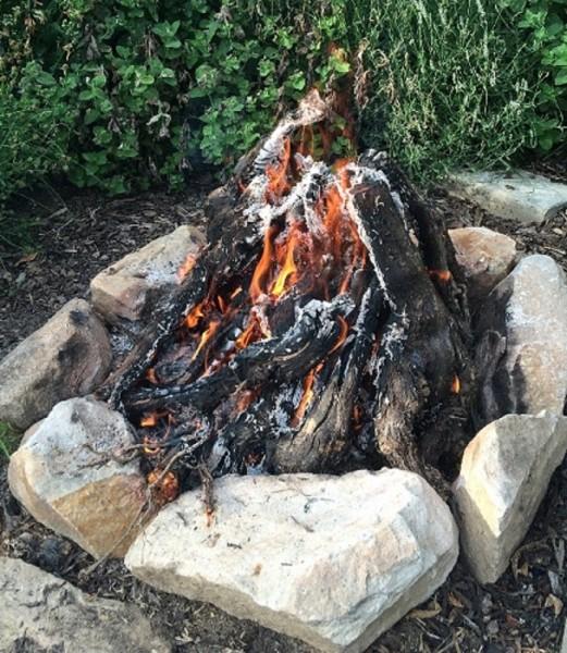 Grillholz: kurze Rebknorzen brennfertig aus über 25 Jahre alten Reben